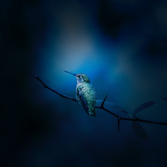 blue bird on a branch with a blue background