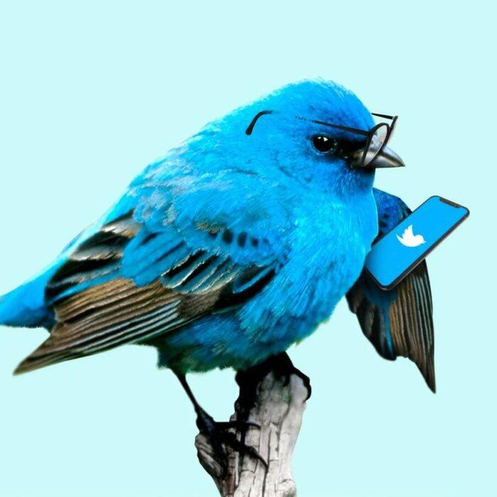 blue bird twitter glasses