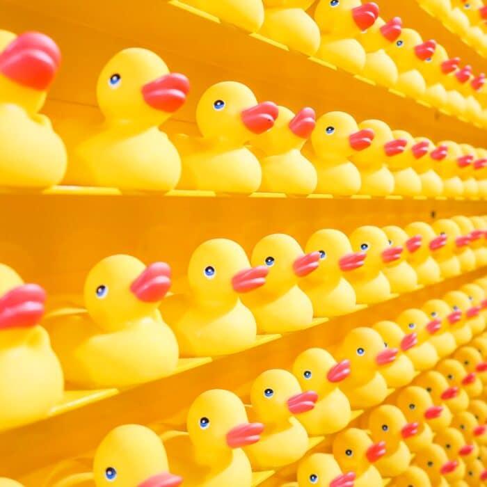 rows of rubber ducks on a shelf group followers
